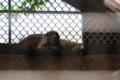 [野毛山動物園2014.]