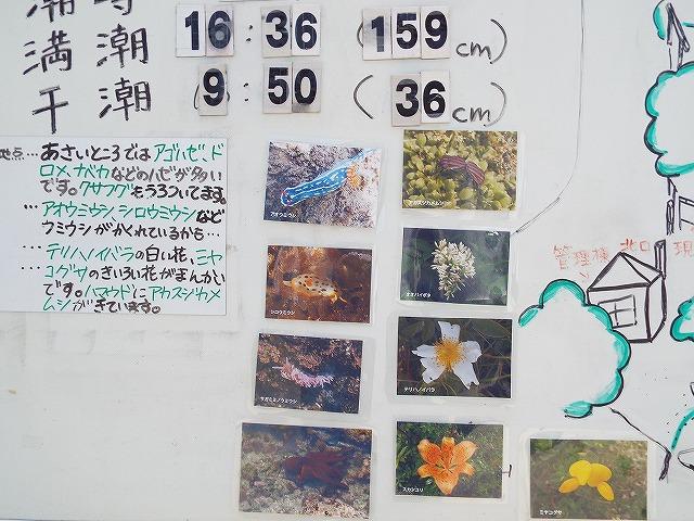 f:id:yuuko1220:20160618210054j:plain