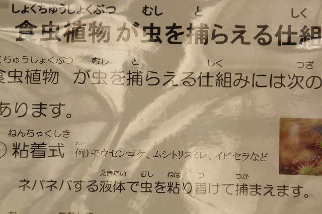 f:id:yuuko1220:20160726212346j:plain