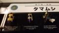 タマムシも沢山展示されていました。標本は色を保つのが難しいとか。