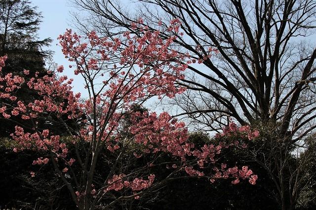 f:id:yuuko1220:20170325215124j:plain