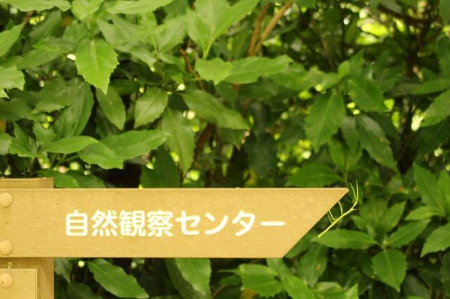 f:id:yuuko1220:20170625221234j:plain