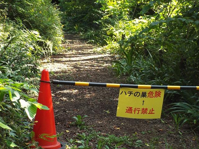 f:id:yuuko1220:20170807221022j:plain