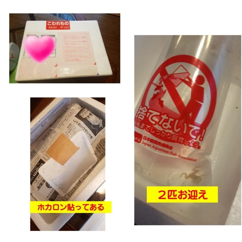 f:id:yuuko1220:20180426085745j:plain