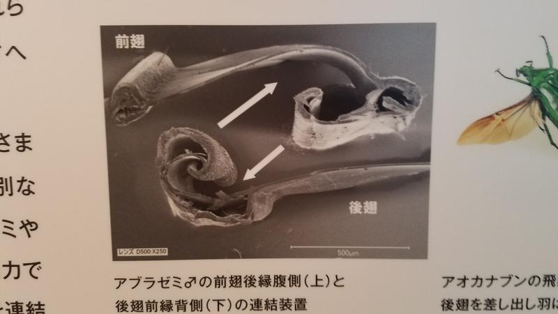 f:id:yuuko1220:20180911155511j:plain