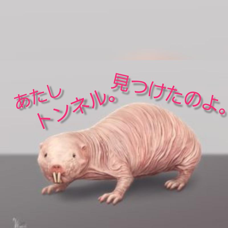f:id:yuuko1220:20200205213336j:plain