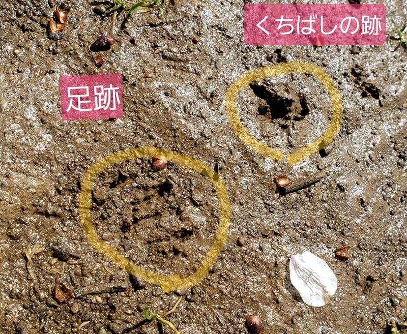 f:id:yuuko1220:20200404215305j:plain