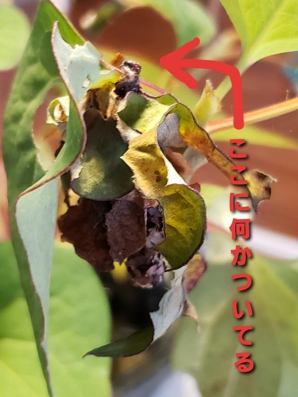f:id:yuuko1220:20200622124305j:plain