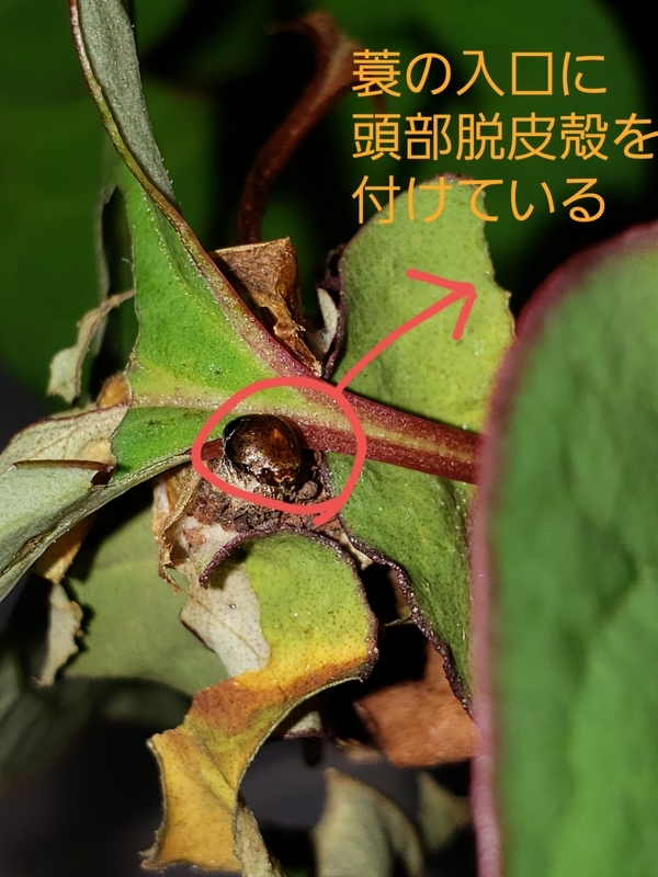 f:id:yuuko1220:20200622124316j:plain