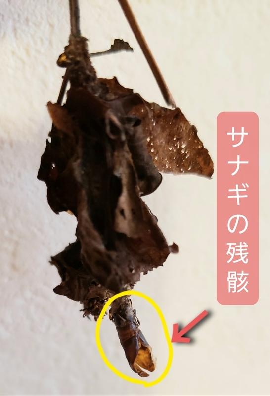f:id:yuuko1220:20200802223434j:plain