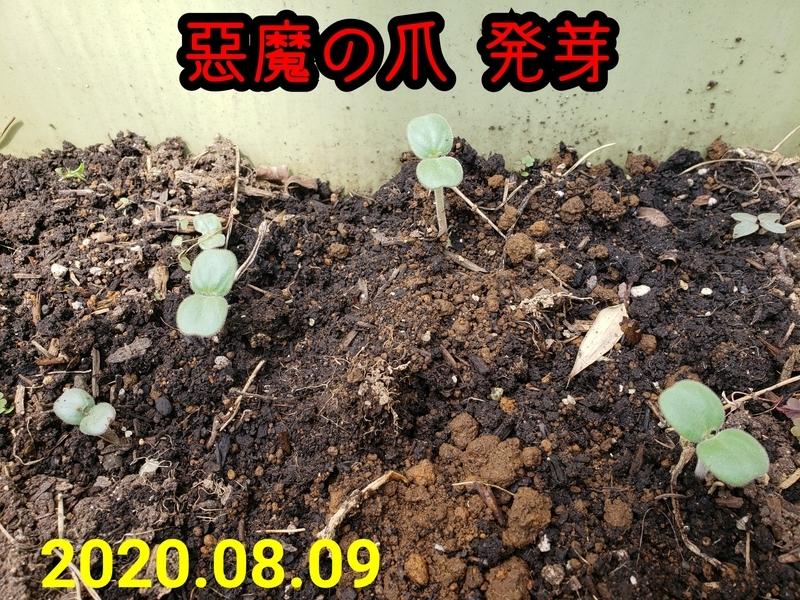 f:id:yuuko1220:20200809131425j:plain