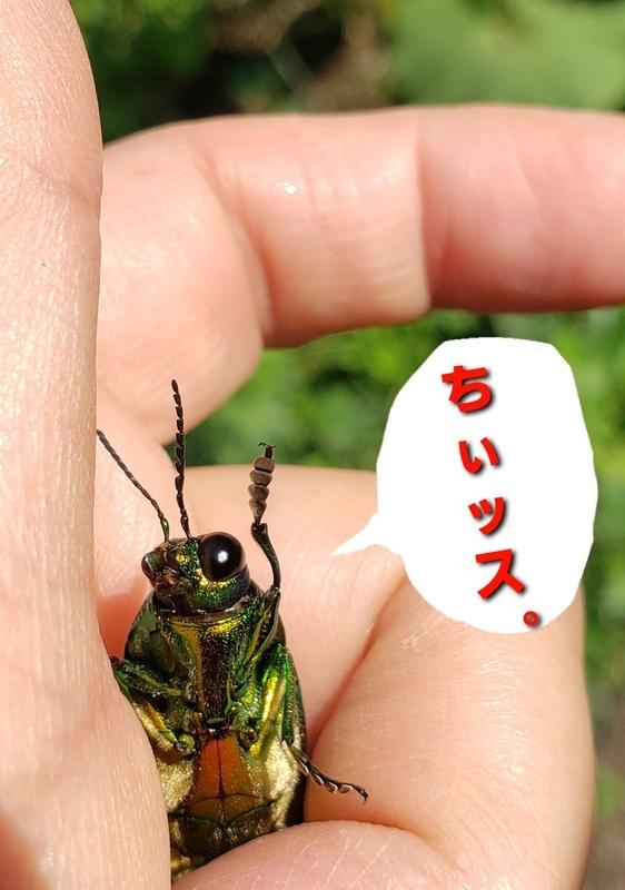 f:id:yuuko1220:20210711154320j:plain