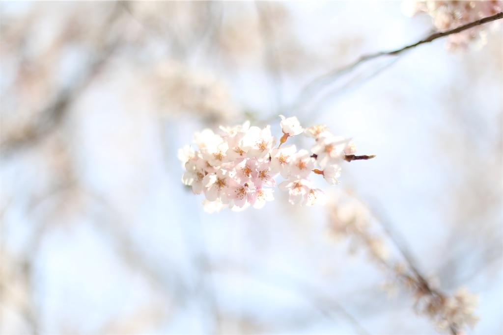 f:id:yuukun-11-hairdresser:20190409075105j:image