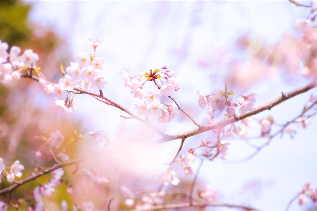 f:id:yuukun-11-hairdresser:20190414161104j:image