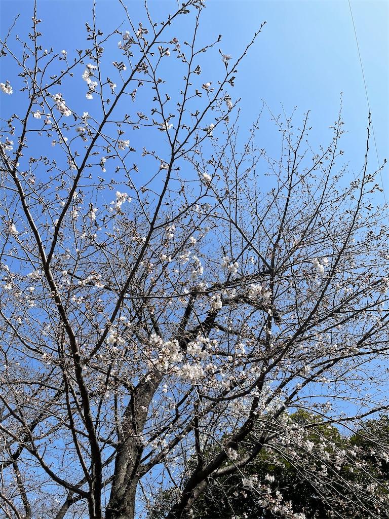 f:id:yuumicoyam:20210318200134j:image