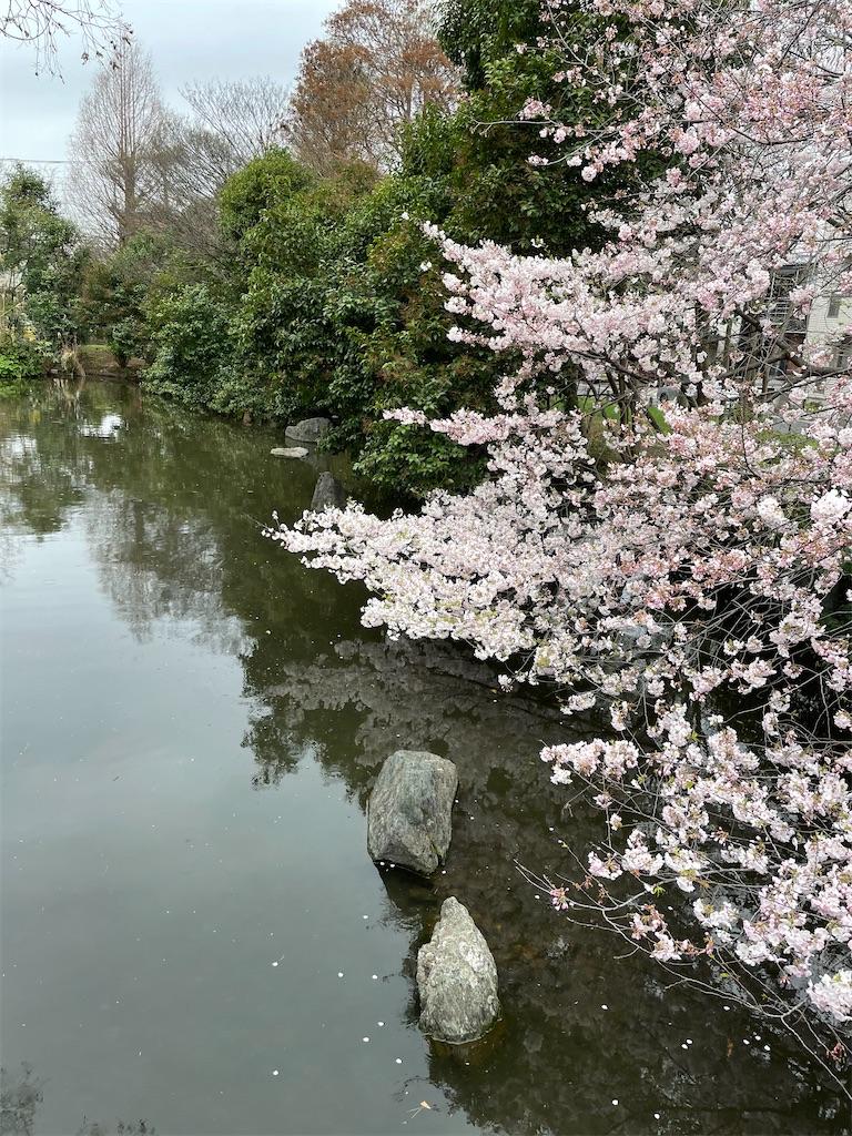 f:id:yuumicoyam:20210326191843j:image