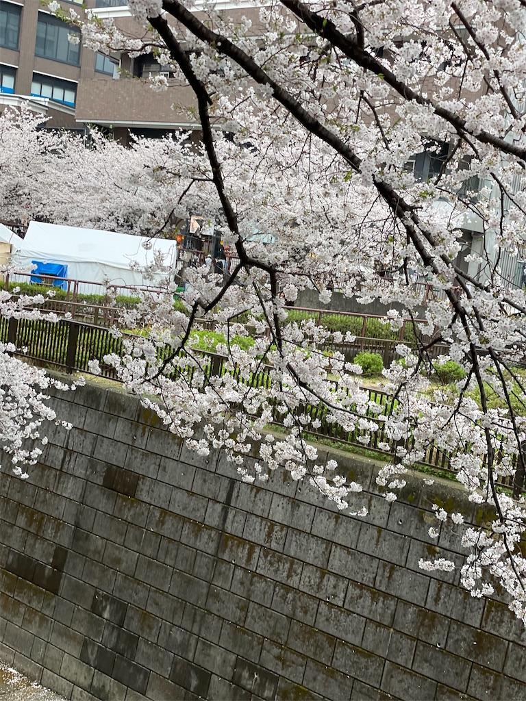 f:id:yuumicoyam:20210328201328j:image