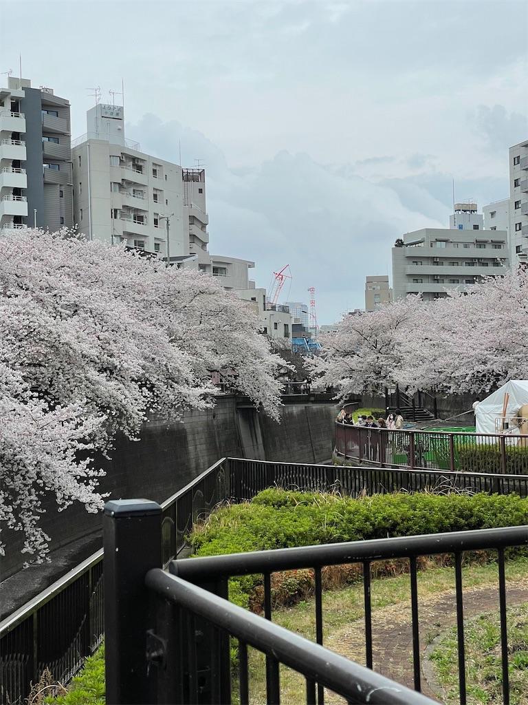 f:id:yuumicoyam:20210328201428j:image