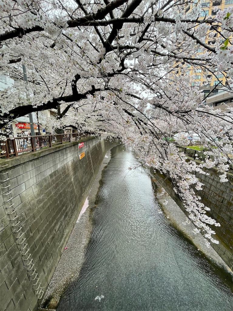 f:id:yuumicoyam:20210328201527j:image
