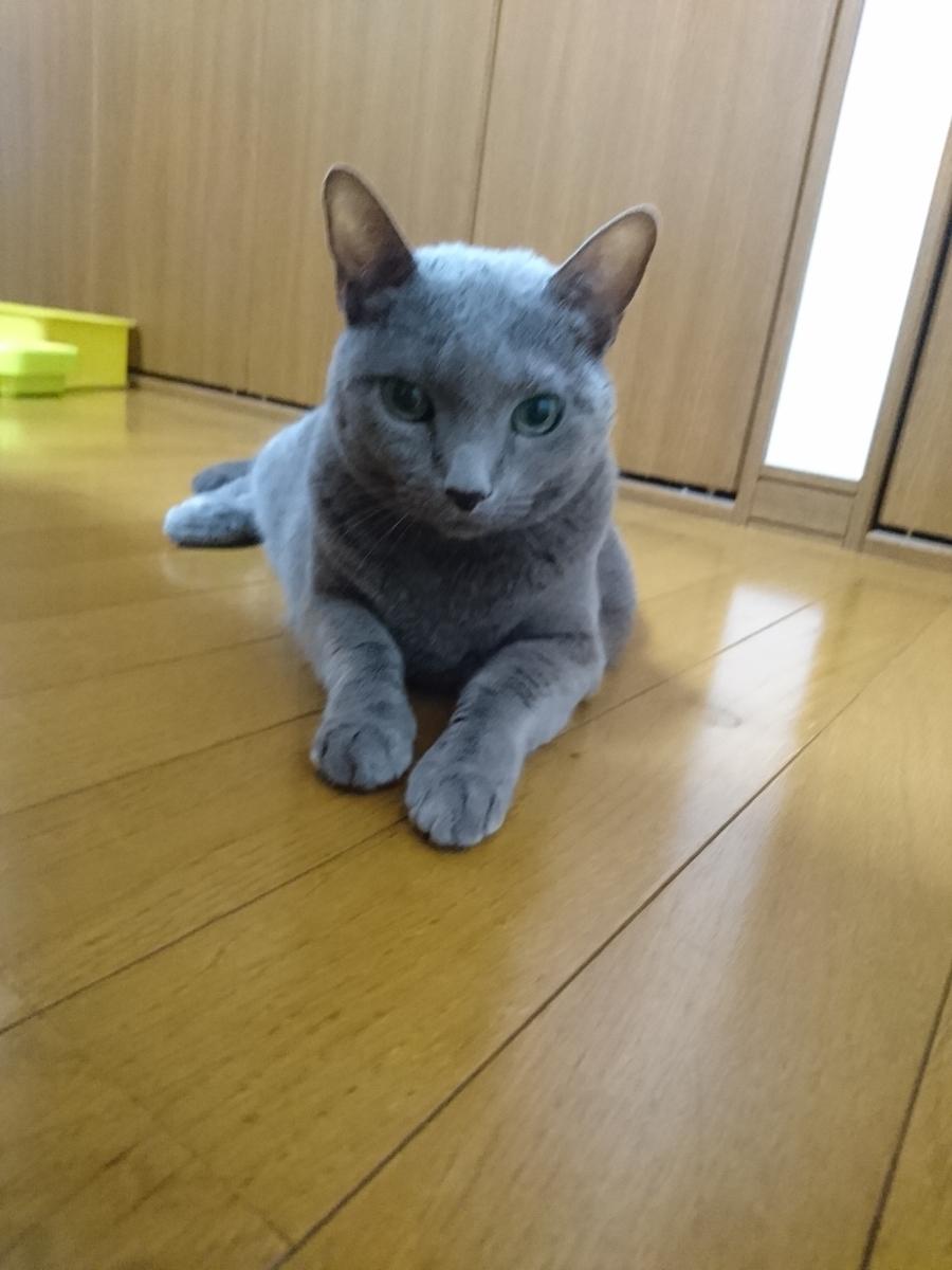f:id:yuurika0118:20190930074942j:plain