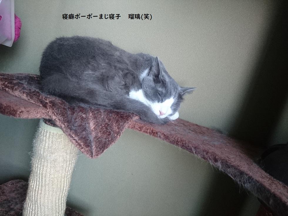 f:id:yuurika0118:20191004000407j:plain