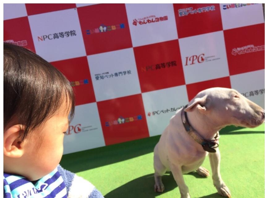 f:id:yuurincheee1117:20171118230834j:plain