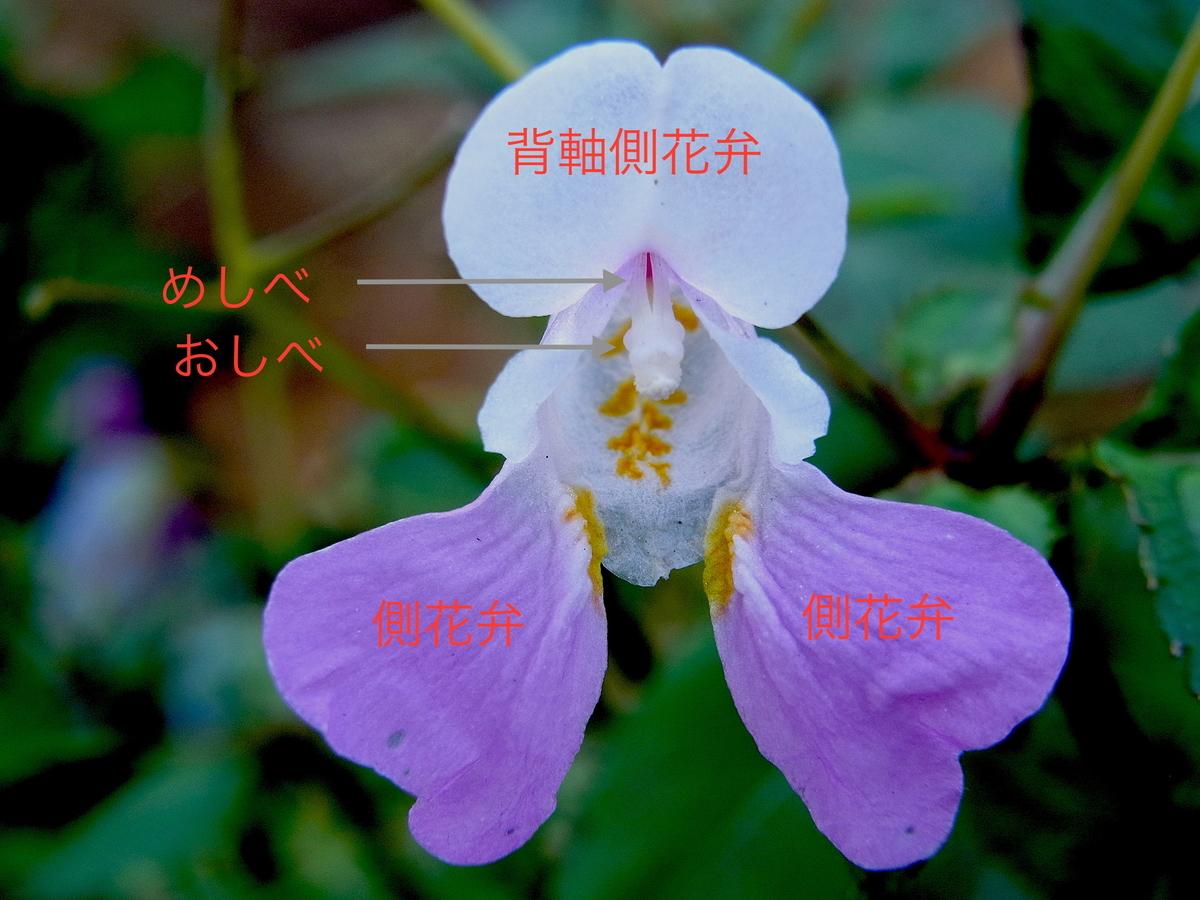 f:id:yuusuget:20200722231111j:plain