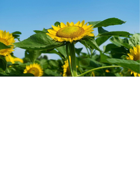 f:id:yuuta0605:20190114004034j:image
