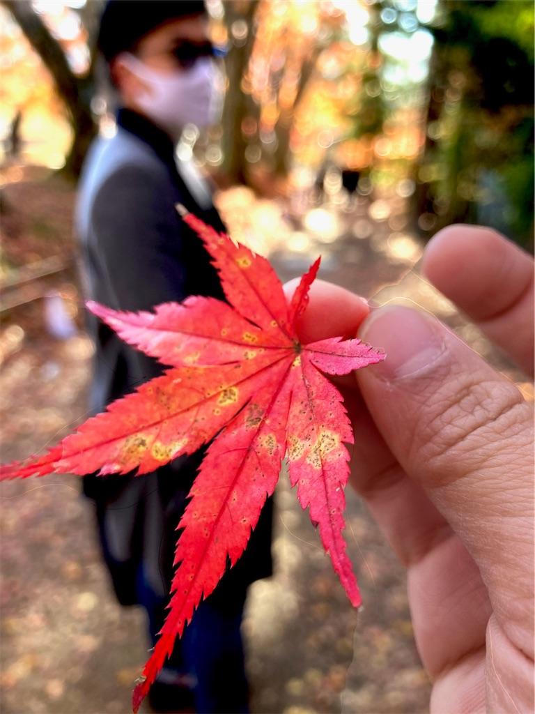 f:id:yuuuuuriii:20201122231650j:image