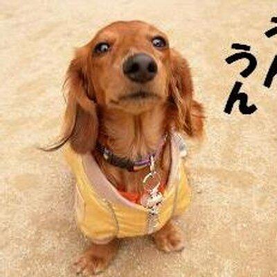 f:id:yuya-toripuru777:20180501105935j:plain
