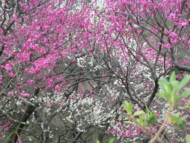 f:id:yuyakereiko:20180312195325j:plain