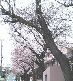 f:id:yuyakereiko:20190329194408j:plain
