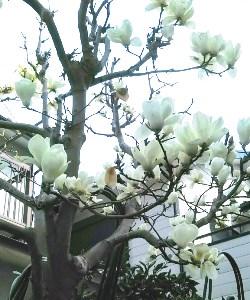 f:id:yuyakereiko:20200316190242j:plain