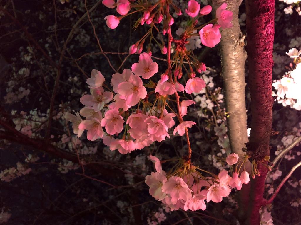 f:id:yuyubu:20190403003423j:image