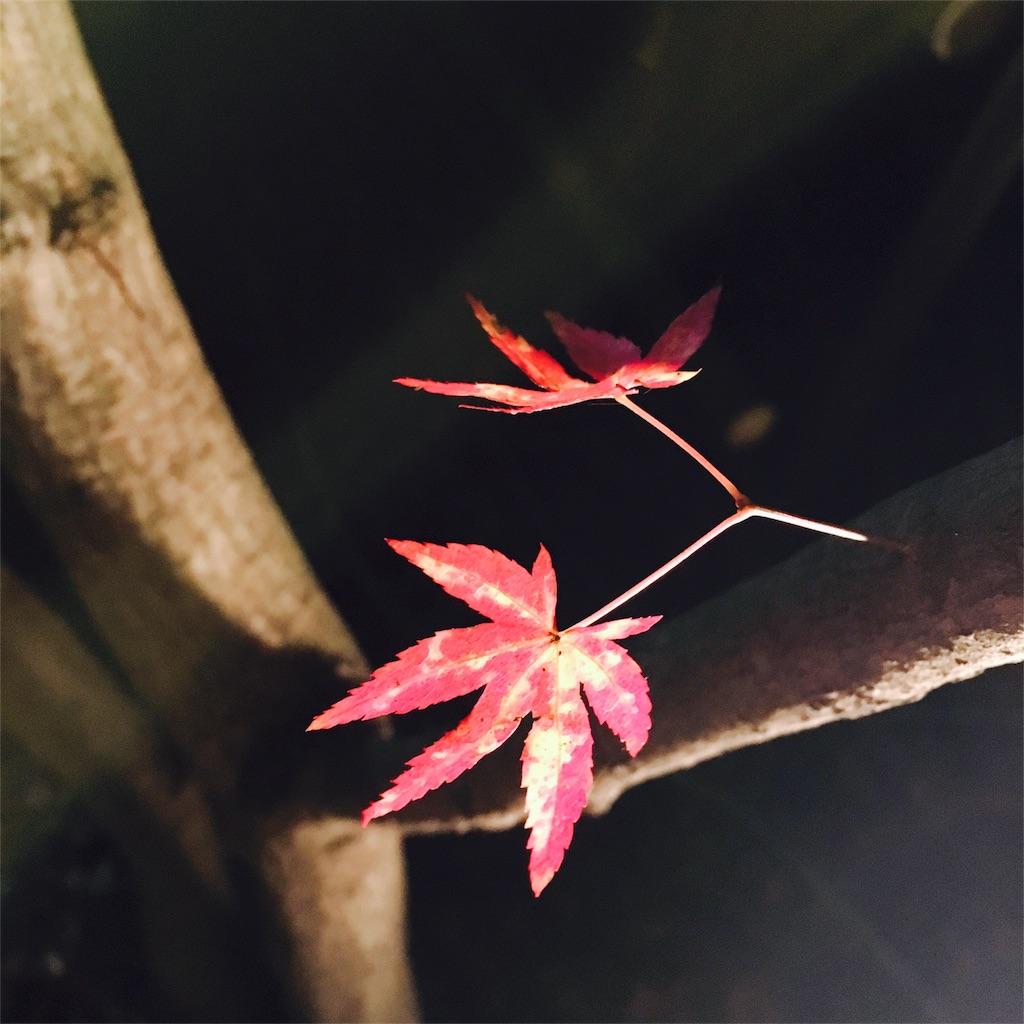 f:id:yuyuka125:20161130171953j:image