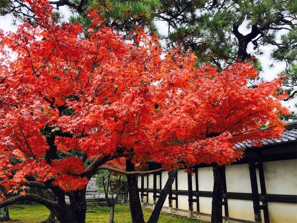 f:id:yuyuka125:20161130174712j:image
