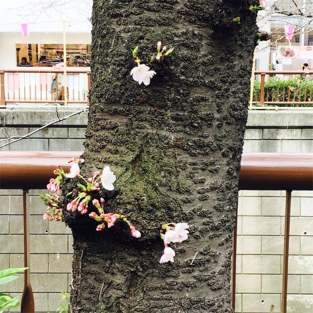 f:id:yuyuka125:20170402033644j:image