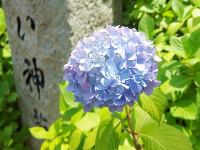 f:id:yuzu-blo:20170610151740j:plain