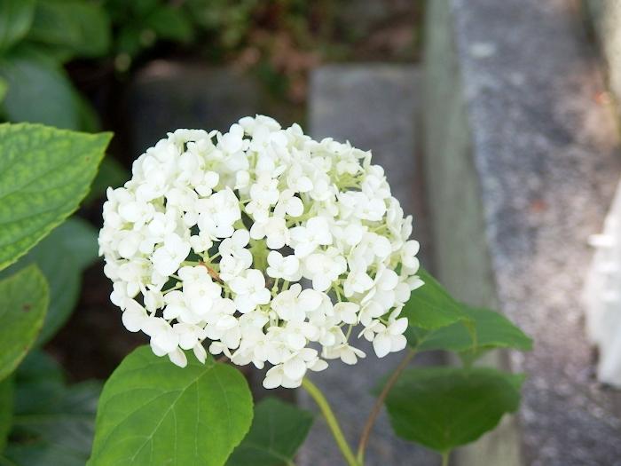 f:id:yuzu-blo:20170610151748j:plain