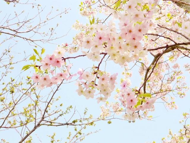 f:id:yuzubook:20210624161153j:plain