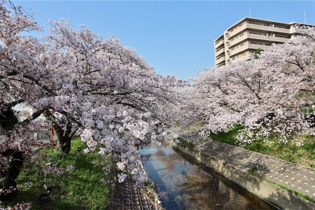 f:id:yuzuhachimitsu:20190329122750j:image