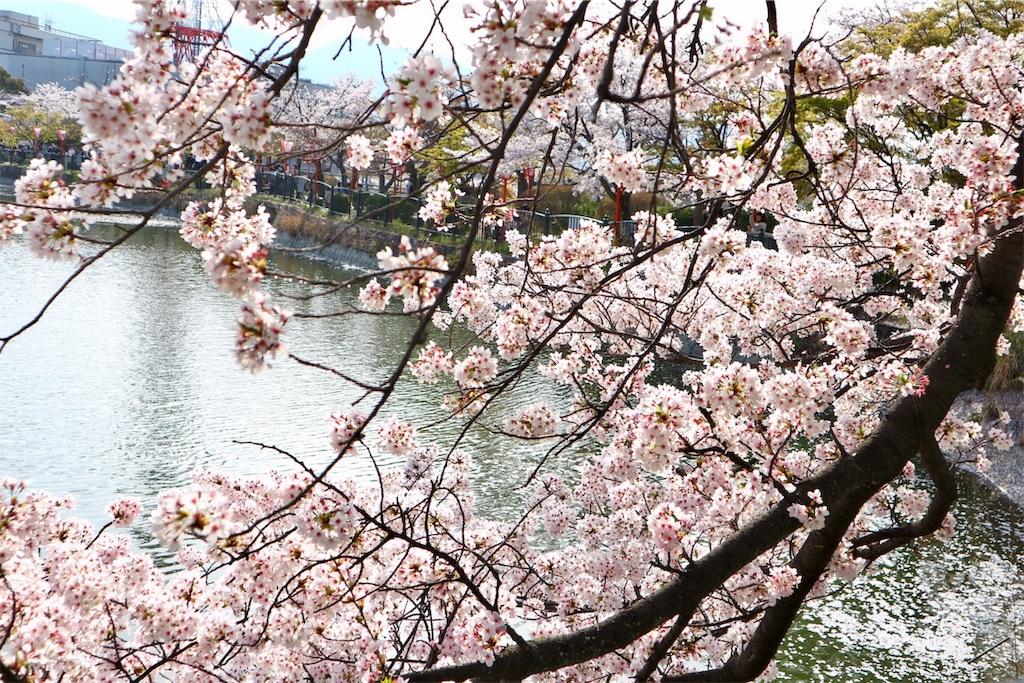 f:id:yuzuhachimitsu:20190329122754j:image