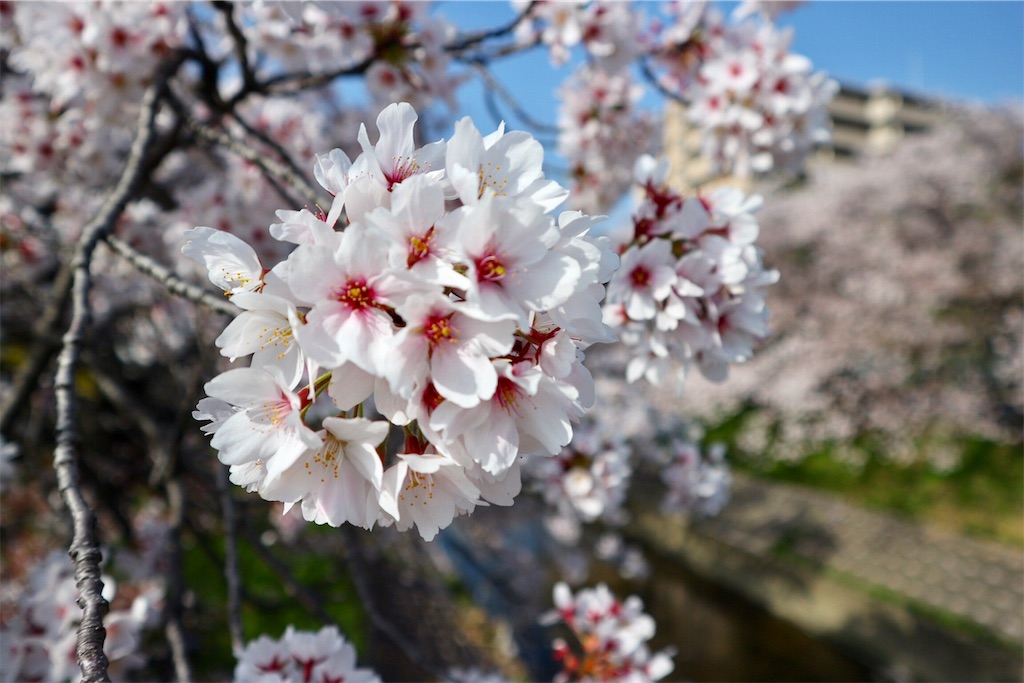 f:id:yuzuhachimitsu:20190329122810j:image