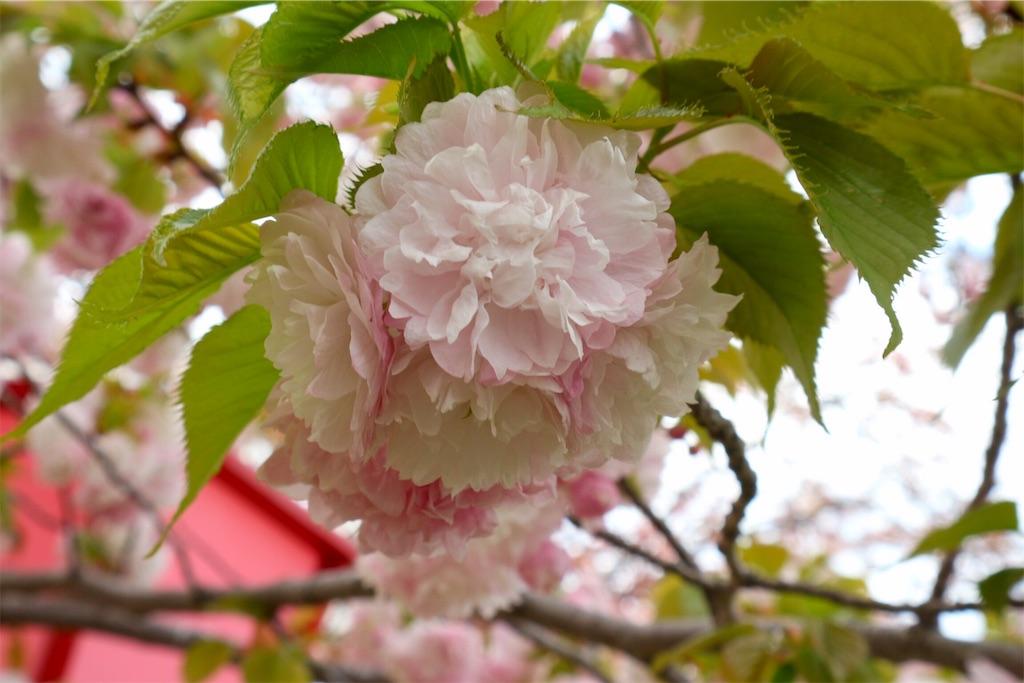 f:id:yuzuhachimitsu:20190415122815j:image