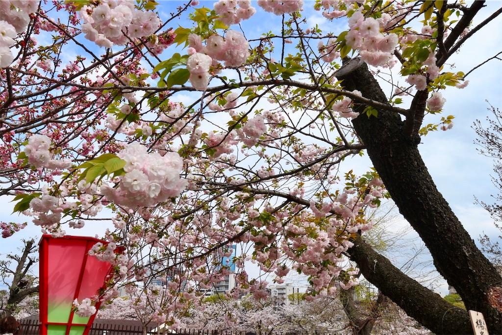 f:id:yuzuhachimitsu:20190415122837j:image