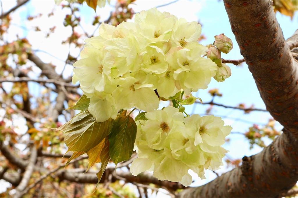 f:id:yuzuhachimitsu:20190415122850j:image