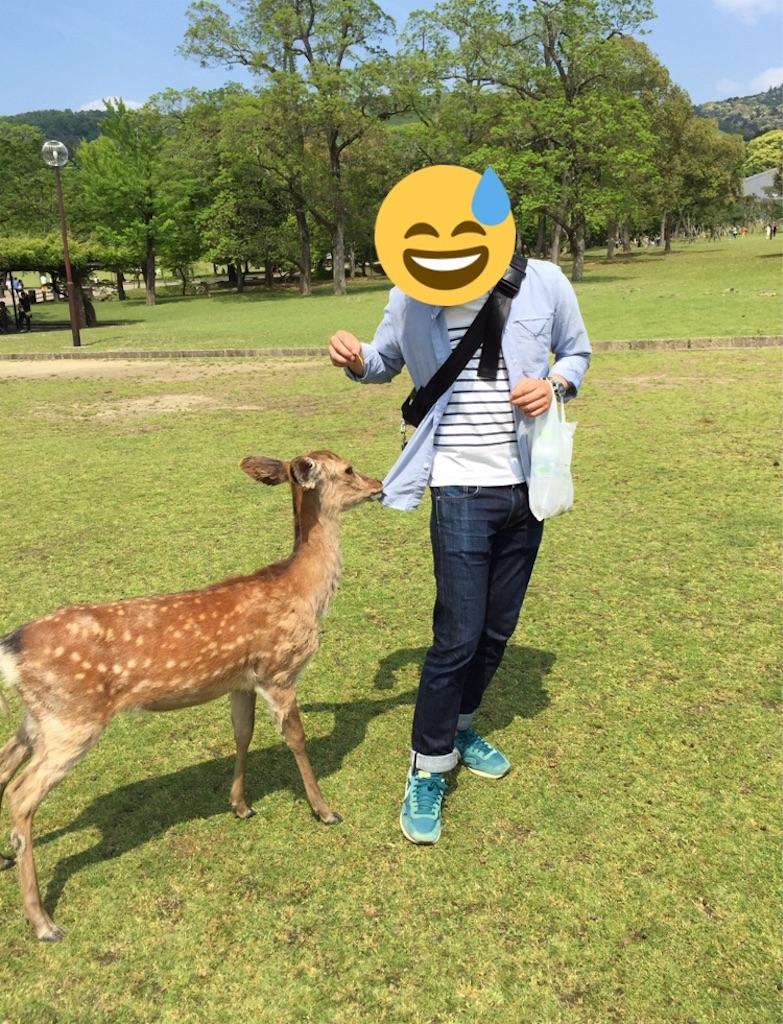 f:id:yuzuhachimitsu:20190425210351j:image