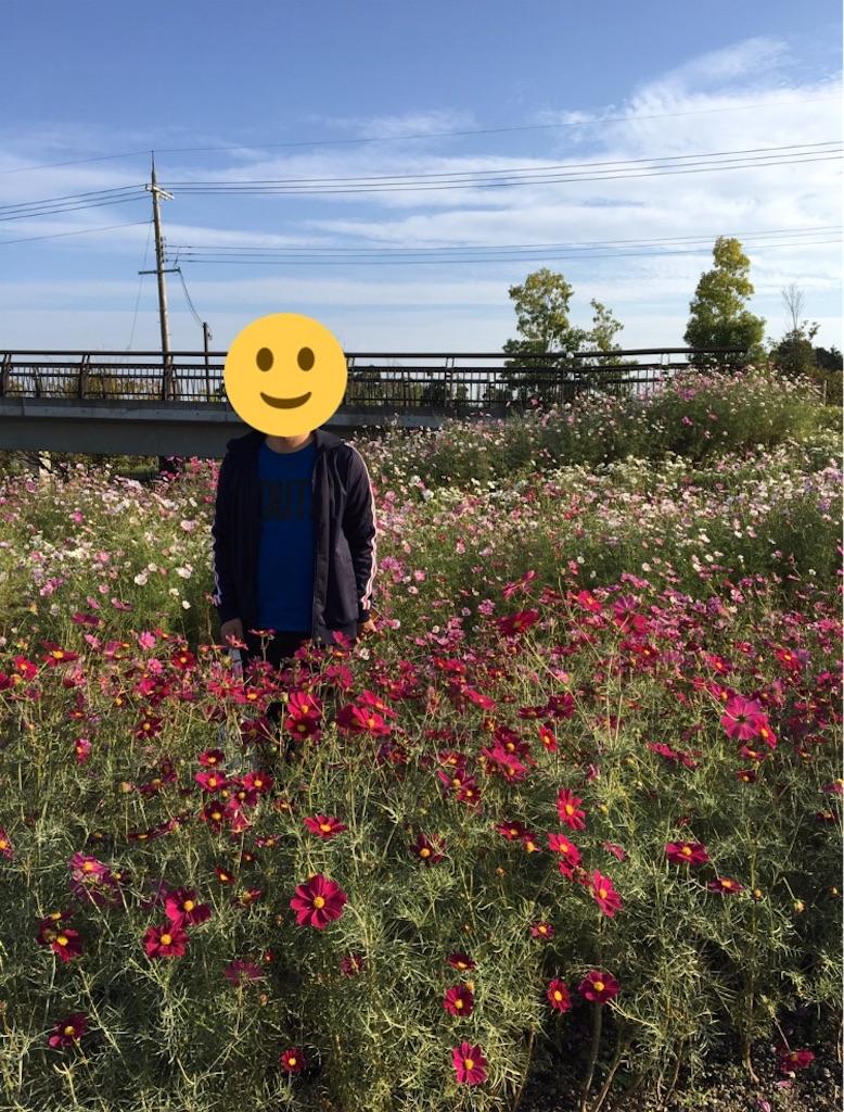 f:id:yuzuhachimitsu:20190426150425j:image