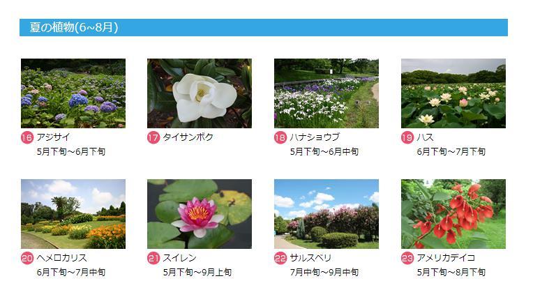 f:id:yuzuhachimitsu:20190626153509j:plain