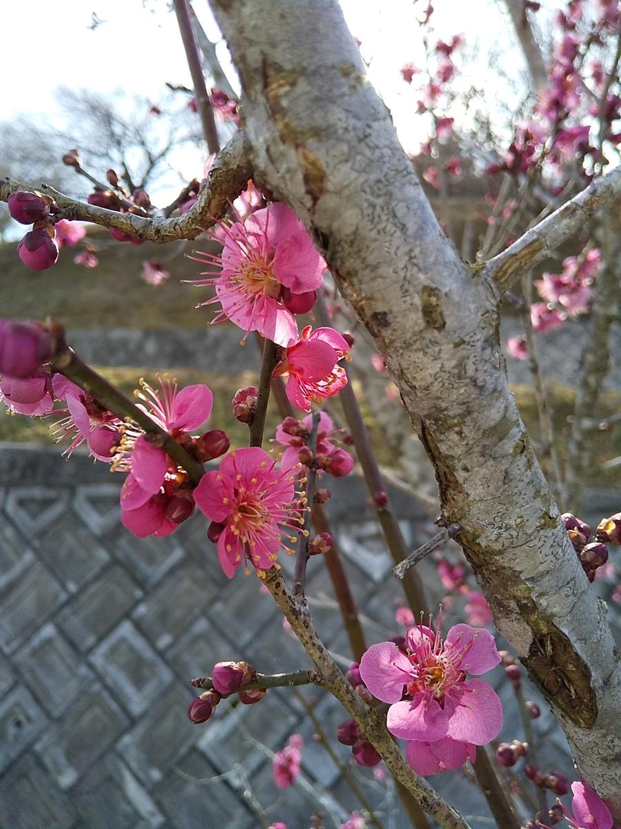 f:id:yuzuhana-785:20210214185936j:plain